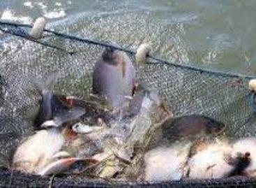 Prefeitura de Parauapebas investe R$ 1,3 milhão em programa de piscicultura