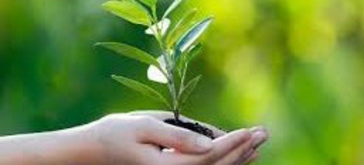 XXI Semana da Árvore de Parauapebas
