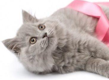 Câncer de mama também afeta animais domésticos