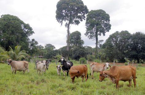 Programa de desenvolvimento rural de Parauapebas será lançado esta semana