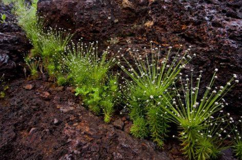 Biodiversidade e história natural da Serra dos Carajás são tema de livro